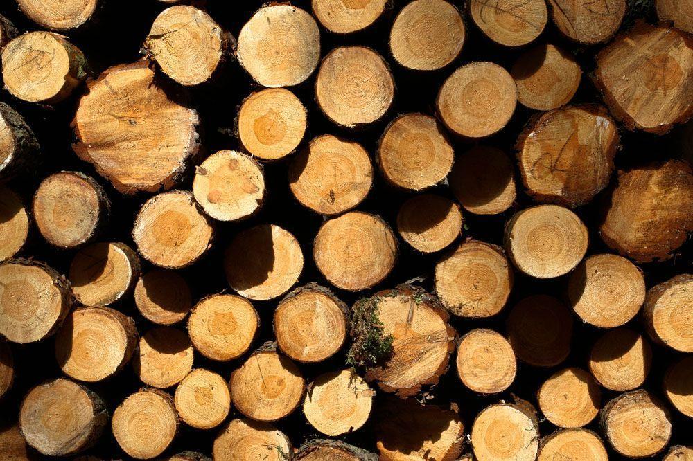 木材为什么会干缩湿胀