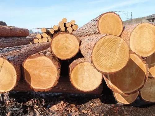 建筑模板的木材材性